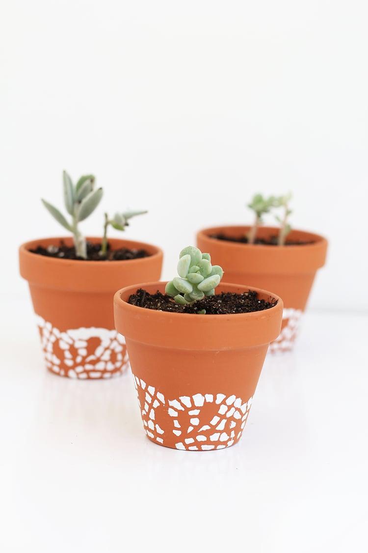 Doily-Painted-Succulent-Plants-2