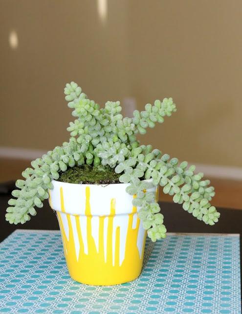 1 yellow pot-1