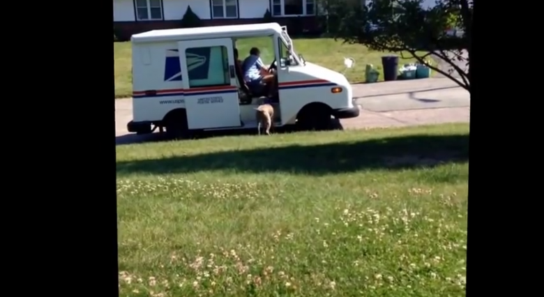 What this dog does with mail