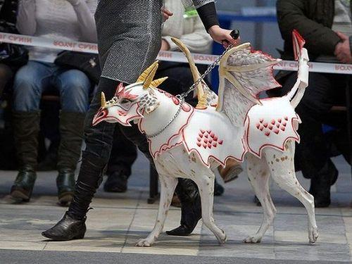17 diy pet costume ideas that are hilariously cute dragon dog costume via imgur 11h3j solutioingenieria Choice Image