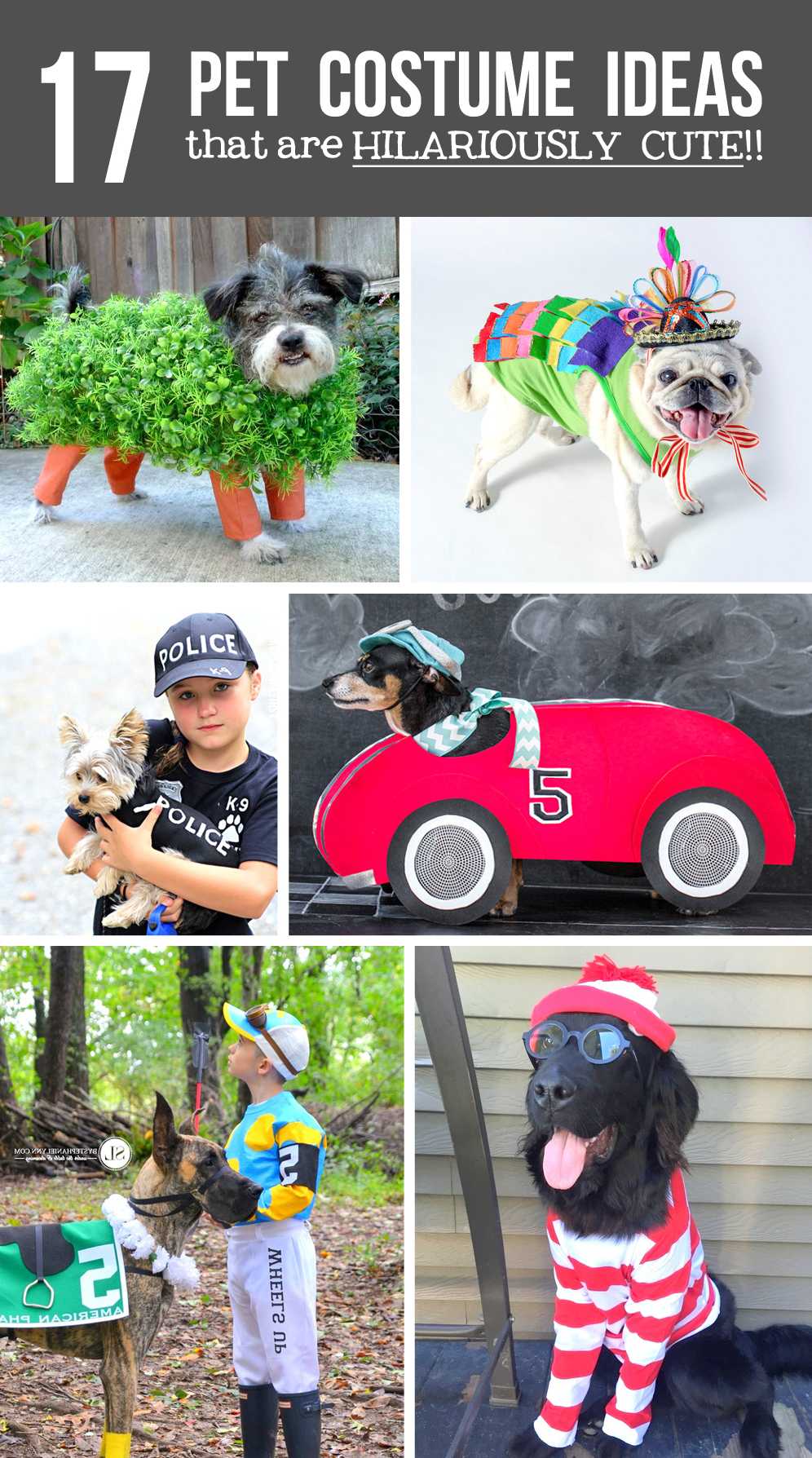Giveaway WINNER…..plus, Pet Costume Ideas!